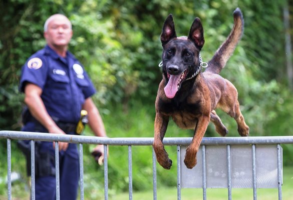 NOPD Canine Unit Fact Sheet